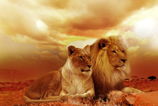 lev a lvice