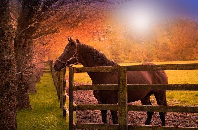 kůň v ohradě